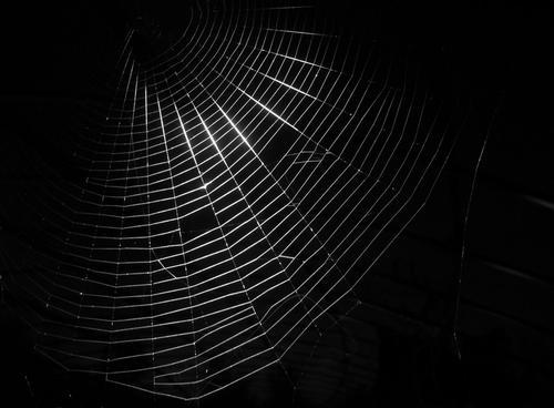 The_Dark_Web_thumb